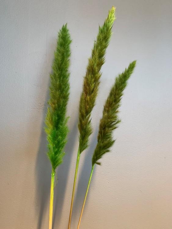 Torkat mini Pampas - Grön