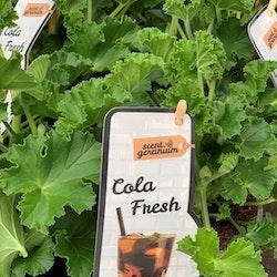 Doftpelargon - Cola Fresh