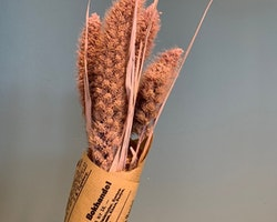 Torkat gräs - Ljusrosa
