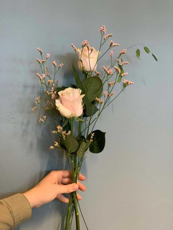 Enkel rosa ros