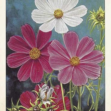 Dubbel kort med kuvert - Motiv 5 - 12x17cm
