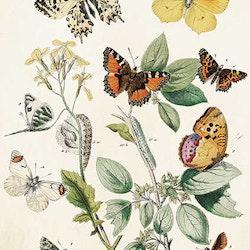 Dubbel kort med kuvert - Motiv 6 - 12x17cm