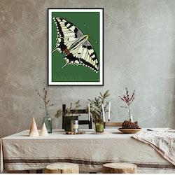 Poster Makaonfjäril