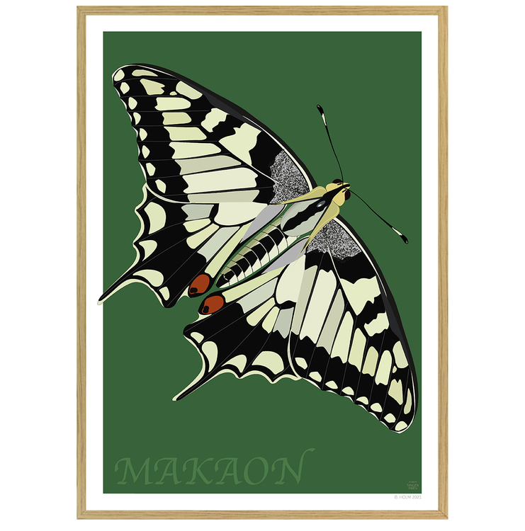 Poster Makaonfjäril med ekram