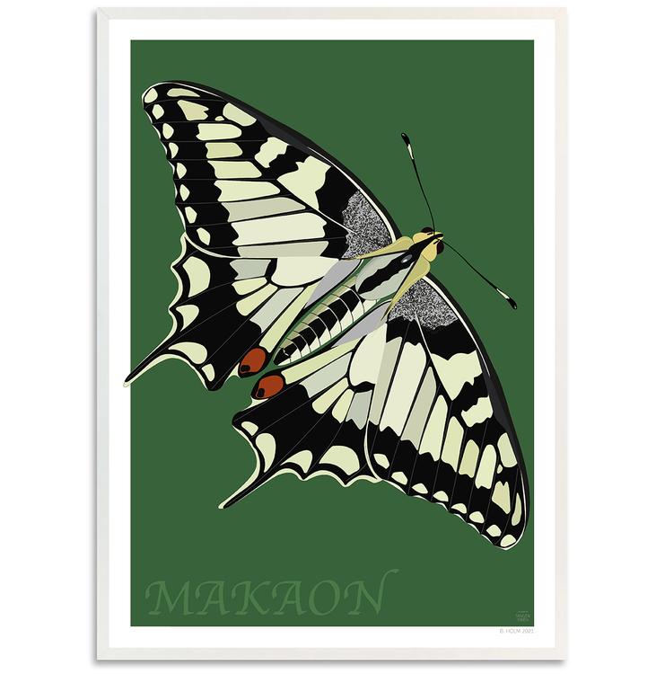 Poster Makaonfjäril med vit ram