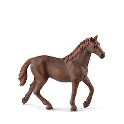 English thoroughbred mare
