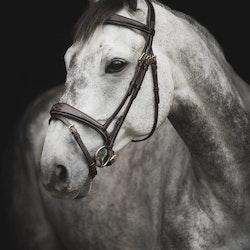 Horse Life Träns Gen-X Fancy