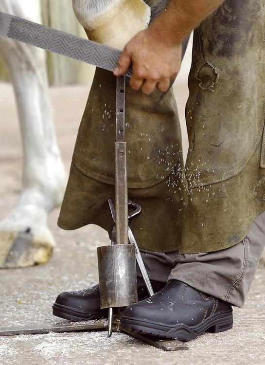 Mountain Horse Protective Jodhpurs