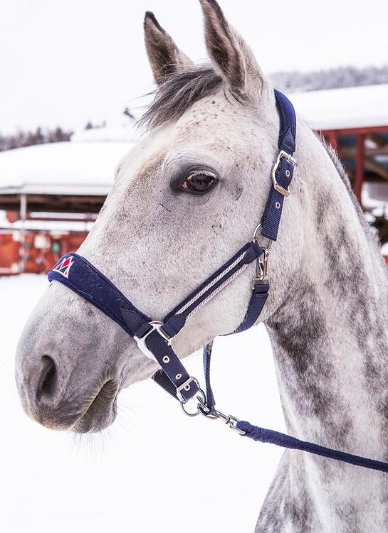 Mountain Horse Grimma med grimskaft Fancy