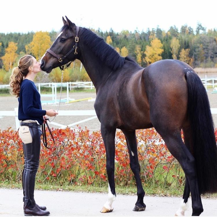 TIB Horse Långa Chaps i Läder - Brun
