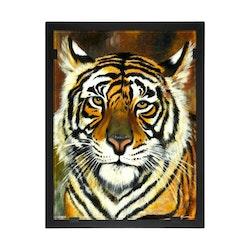 Glasvision Glastavla Tiger