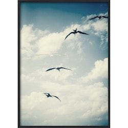 Estancia Poster Flying Birds