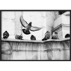 Estancia Poster Fountain Birds