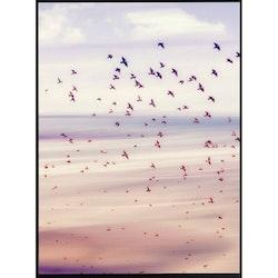 Estancia Poster Flyttfåglar