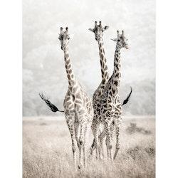 Estancia Tavla Canvas Nature Giraffes