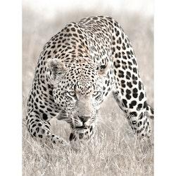 Estancia Tavla Canvas Nature Leopard