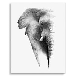 Estancia Tavla Canvas Elephant Head