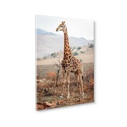 Estancia Tavla Canvas Giraffe in the Wild
