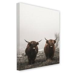 Estancia Tavla Canvas Highland Cows