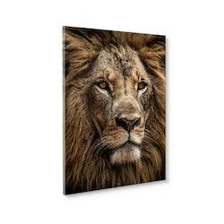 Estancia Tavla Canvas Majestic Lion