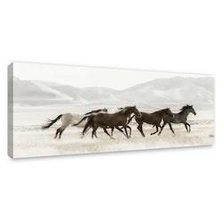 Estancia Tavla Canvas Mustangs