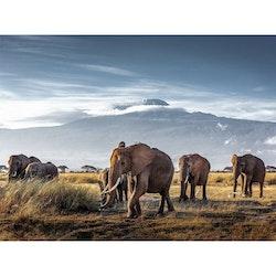 Estancia Tavla Canvas Elephants by Kilimajaro