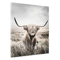 Estancia Tavla Canvas Highland Cattle