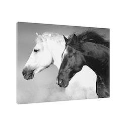 Estancia Tavla Canvas Horse Black & White