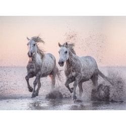 Estancia Tavla Canvas Horse in Dawn