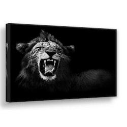 Estancia Tavla Canvas Lion