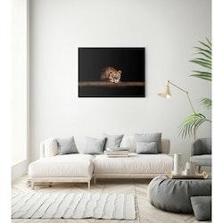 Estancia Tavla Canvas Waiting Lion