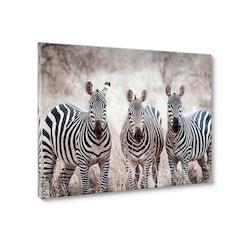 Estancia Tavla Canvas Zebras