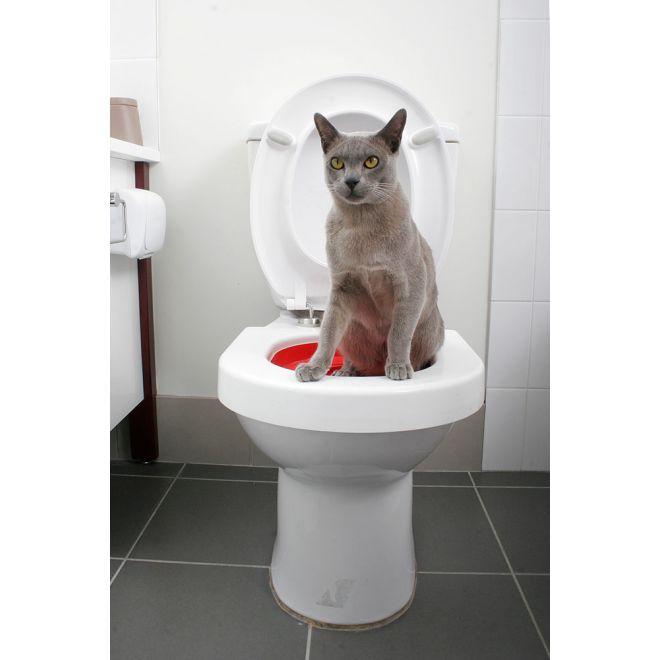 Litter kwitter  - träna din katt att gå på toa