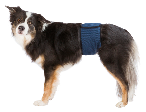 Hanhundskydd S - M: 37 - 45 cm