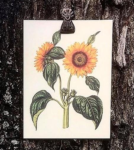 Poster Solrosor Två