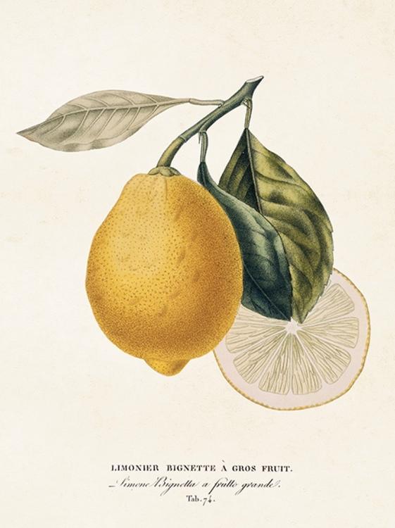 Poster Citron