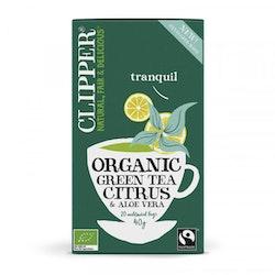 Grönt te med Citrus & aloe vera