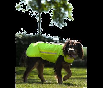 Dogtech one