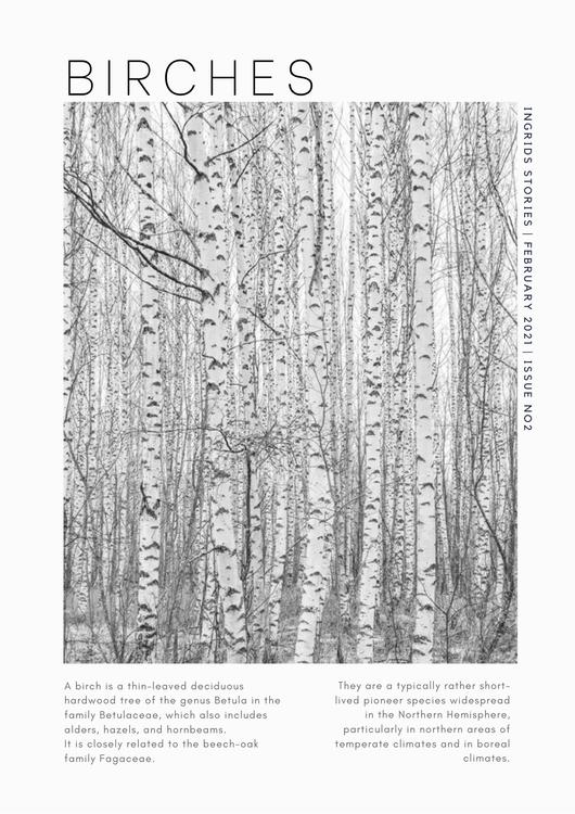 """Poster """"Birches"""""""