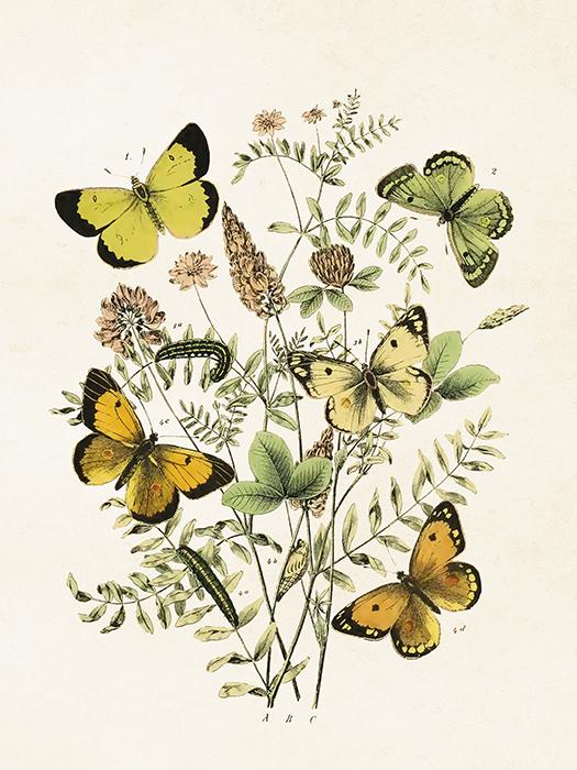 "Poster ""Fjärilar"""