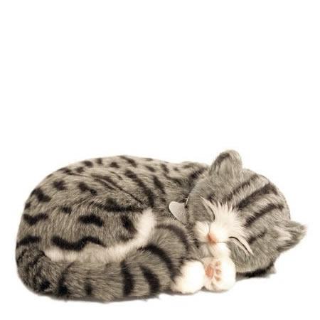 Katt grå tabby