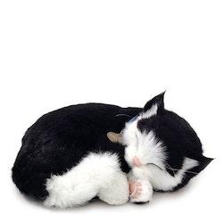 Katt svartvit