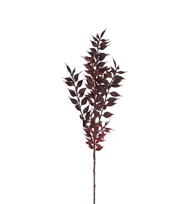 Ruscus, burgundy