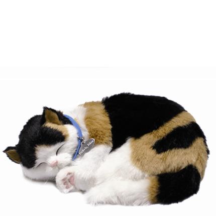 Katt 3-färgad