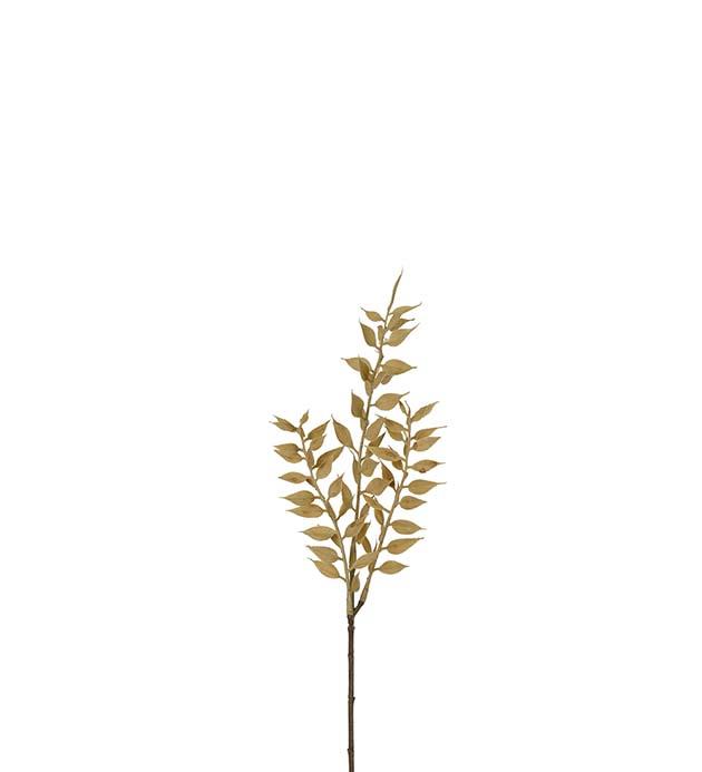 Ruscus beige