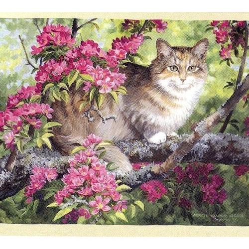 "Kort ""Katt"""