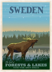Postcard Moose Forests / Lakes 13x18cm