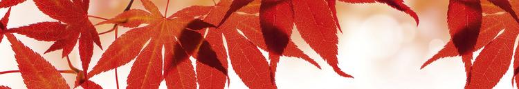 Splashback stänkskydd - RED LEAVES