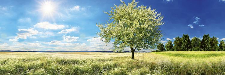 Splashback stänkskydd - BLOSSOM TREE