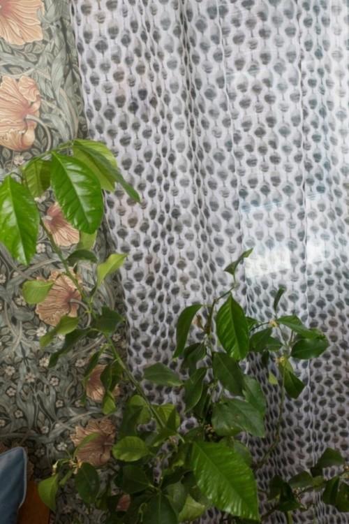 Angela ett gardinset med multiband. Färg: Vit och grön.